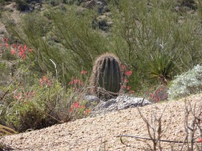 Cacti on Pinnacle Peak Trail, Scottsdale, AZ