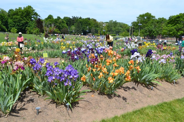 The Gardens today see 10,000 visitors annually, there to learn about and enjoy the beauty of the iris collection.
