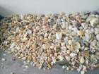 That is a lot of Shells!