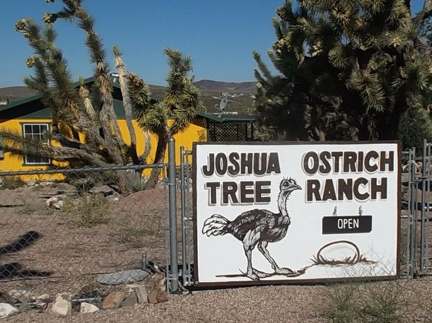 Joshua Tree Ostrich Ranch