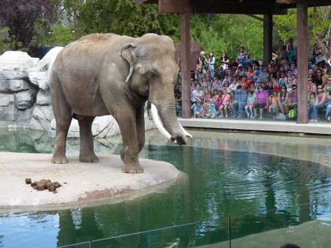 Elephant Show at Denver Zoo