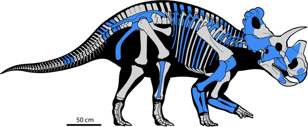 Skeletal reconstruction of Wendiceratops pinhornensis