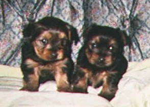 Puppies at 6 weeks