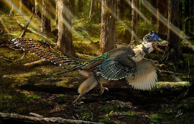 "Feathered cousin of ""Jurassic Park"" star unearthed in China: University of Edinburgh News Release 16 July 2015"