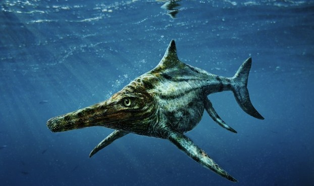 """Introducing Dearcmhara shawcrossi, the dino-fish that all the fuss is about."""