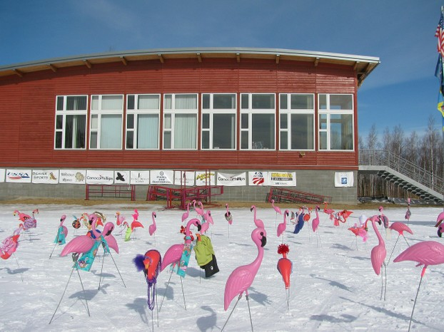 Fairbanks Flamingos