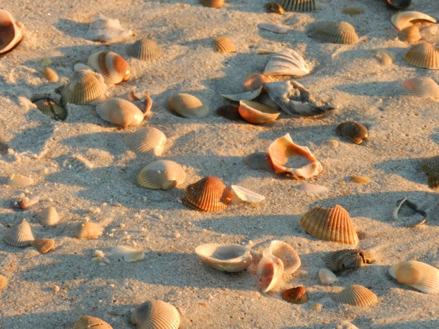 Shells and Shadows