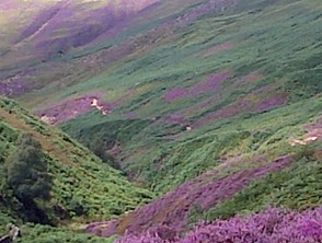 A heather covered vale