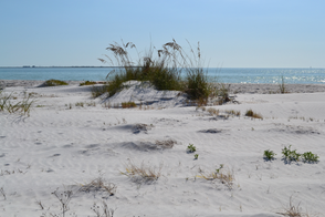 Fort De Soto is perfect for those who love nature and quiet beaches.