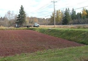 """Harvested"" Cranberry Bog"