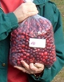My big bag of fresh Maine Cranberries