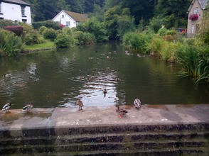 Village duck pond