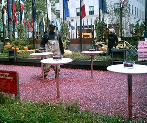 Rock Center Cranberry Bog
