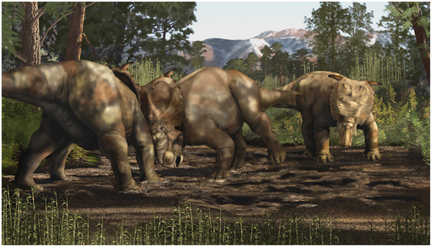 Anthony R. Fiorillo and Ronald S. Tykosk, An Immature Pachyrhinosaurus perotorum, Figure 1, PLoS ONE 19 June 2013
