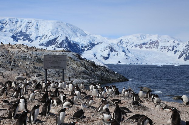 Gentoo Penguins nest around this historic site where the two British researchers Thomas W. Bagshawe and Maxime C. Lester spent a year in 1921-22.