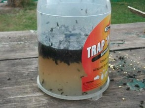 Trap 'n' Toss filled with flies