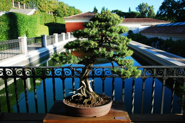 Bonsai trees come in a variety of species, from easy-to-care for shapes to complex designs that require special maintenance.