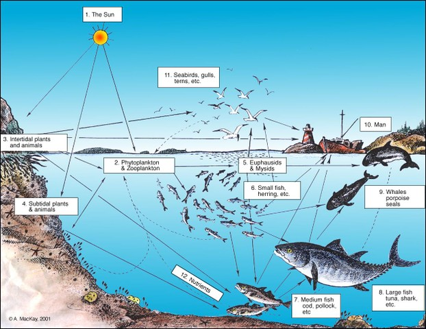 The Food Web in the North Atlantic