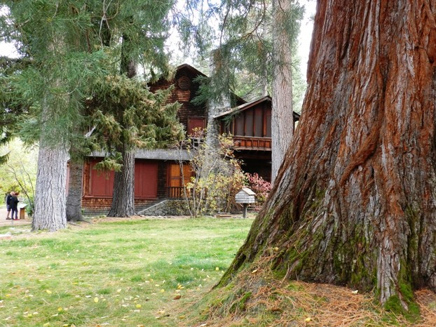 Sequoia Tree and Historic Home
