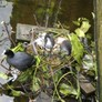 Some birds making a home in the canals