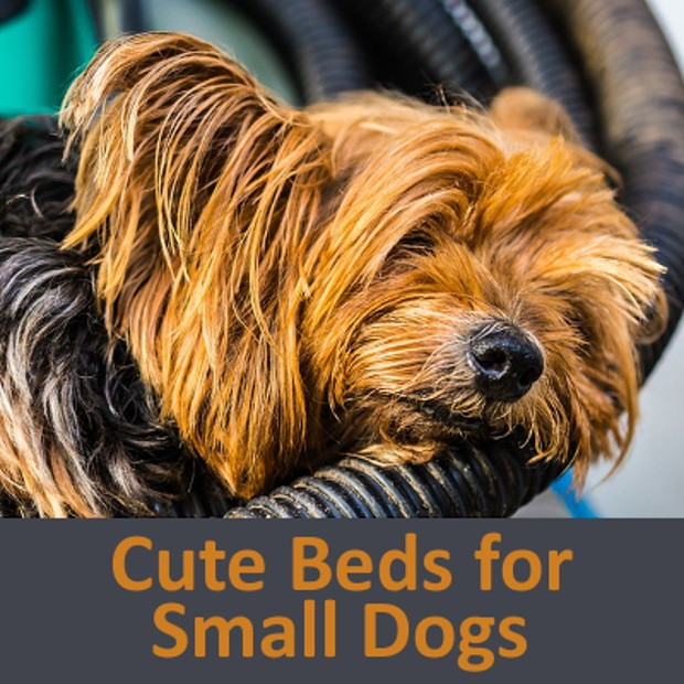 Small dog beds sofas and pet furniture