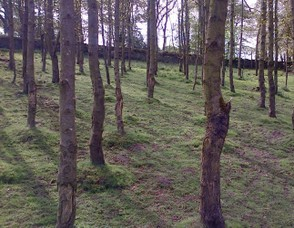 A small Copse