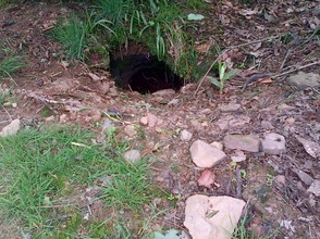 Badger burrows