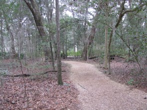 A view of the woodland walk.