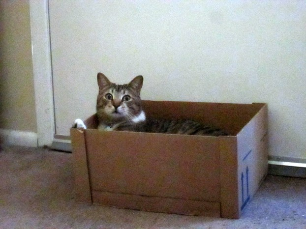 Handsome Playing in a Box
