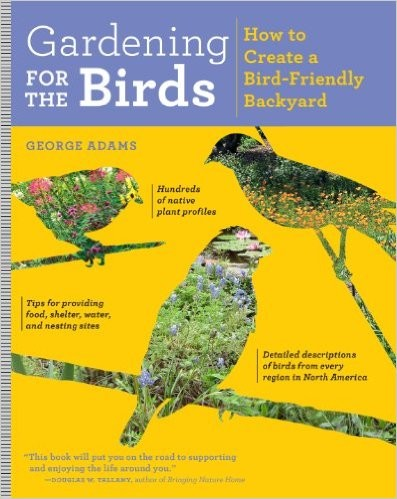 Create a Bird Friendly Yard