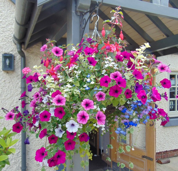 hanging baskets at The Red Lion Pub