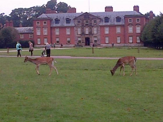 the deer walk around the visitors