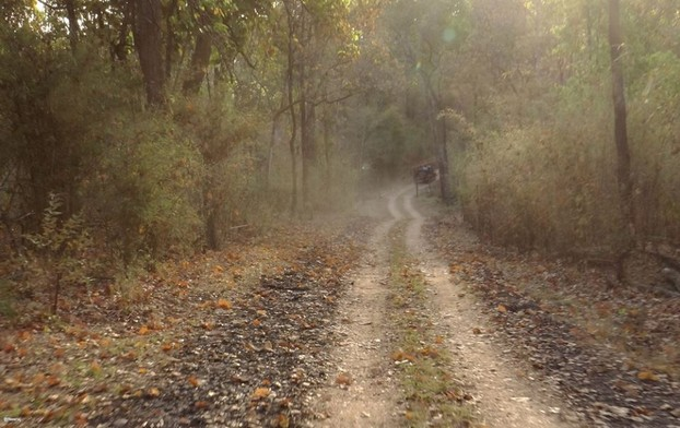 Kanha Forests