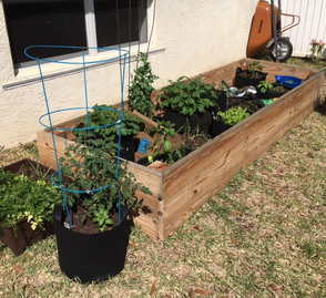 Beginning a new garden in Florida