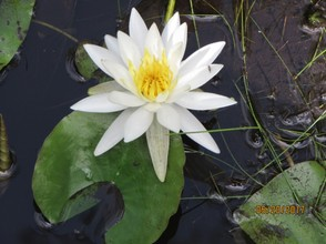 Lilies can be a resting place for many smaller critters