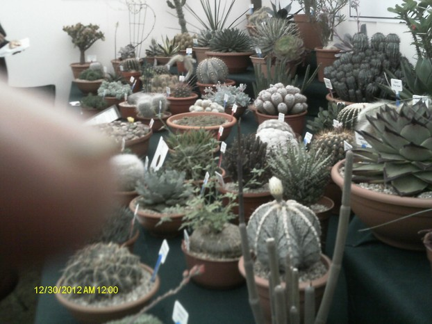 The British Cactus and Succulent Society
