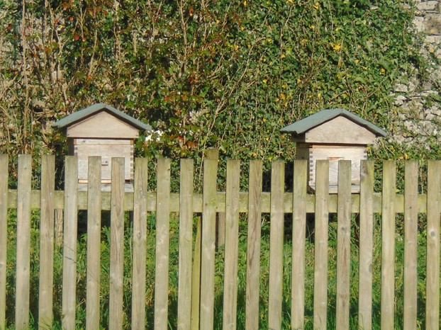 Separate bee hives from the solitary bees on the dahlia walk