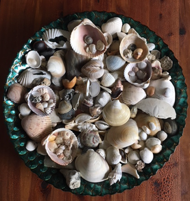 My seashells