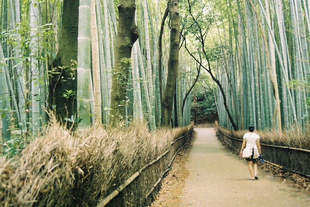 Arashiyama Bamboo Forest, western Kyoto, central Honshu Island, central Japan; Aug. 10, 2006
