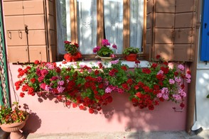 Burano flower boxes