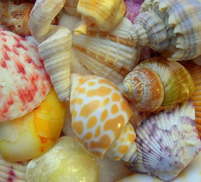 small colorful seashells