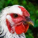Chicken profile avatar