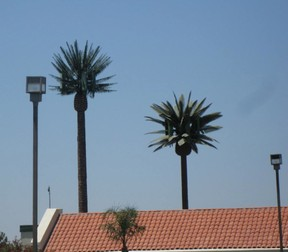 Cell phone towers that look like trees