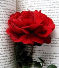 Red Rose in a Book