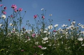 Cosmos in the Free State