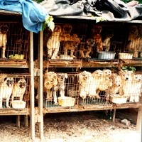 A Puppy Mill