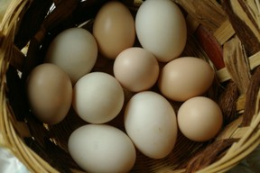 A basket of chicken and duck eggs