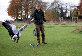 A display with Dave the Secretary Bird