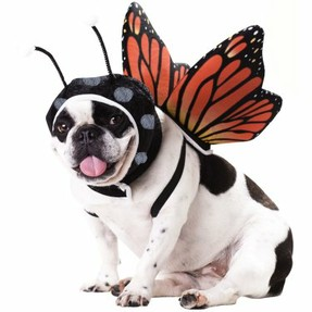 Butterfly Dog Costume