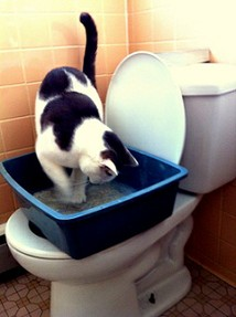 Albus Toilet Trained Cat City Kitty Step 2